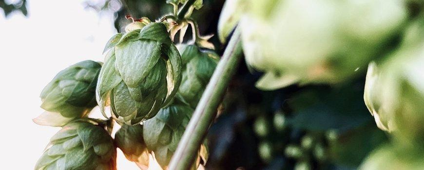 Wat vertelt de IBU/EBU over een bier - Bierwebshop
